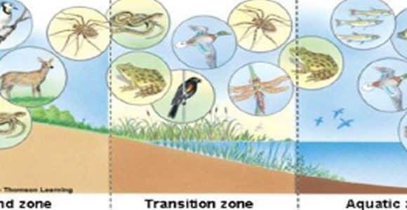 Разработване на съвместен модел и методология за оценка на екосистемни услуги в езерата Вая (Бургас) и Гала (Енез)